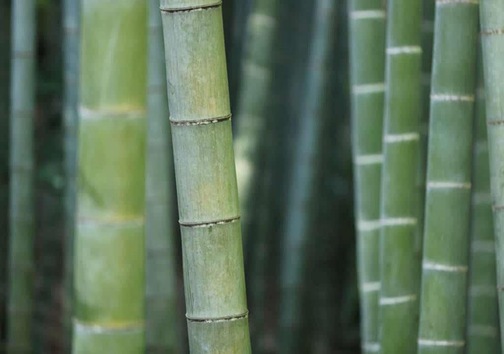 charbon bambou shop